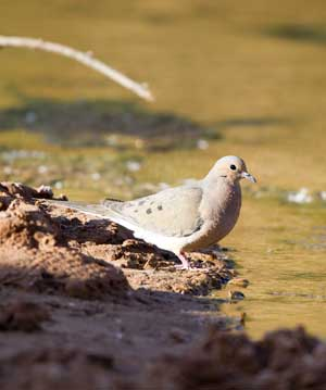 strategies of dove A mixed strategy profile is a list of strategies, one for  another example is provided by the hawk-dove game, which has been used by evolutionary biologists to.