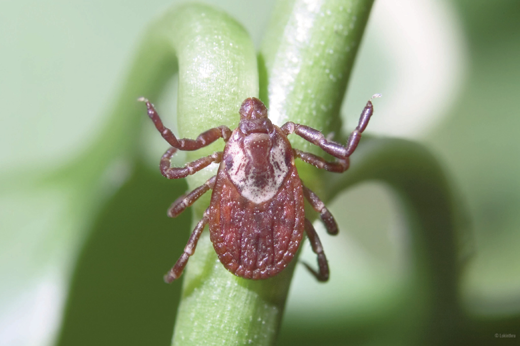 avoiding ticks