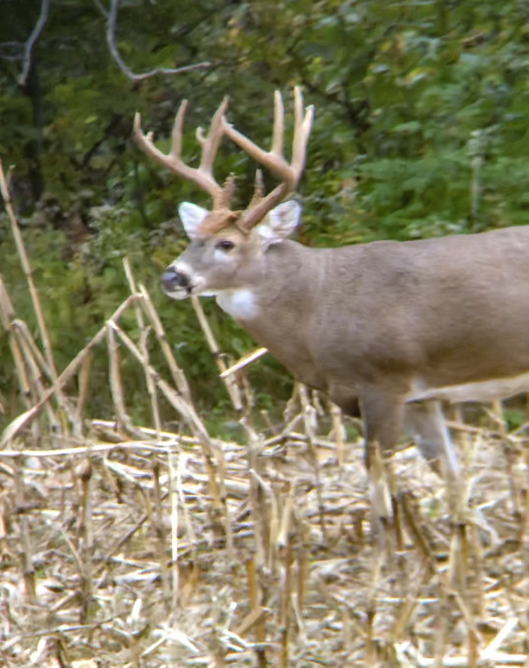 Pike County Illinois Big Buck
