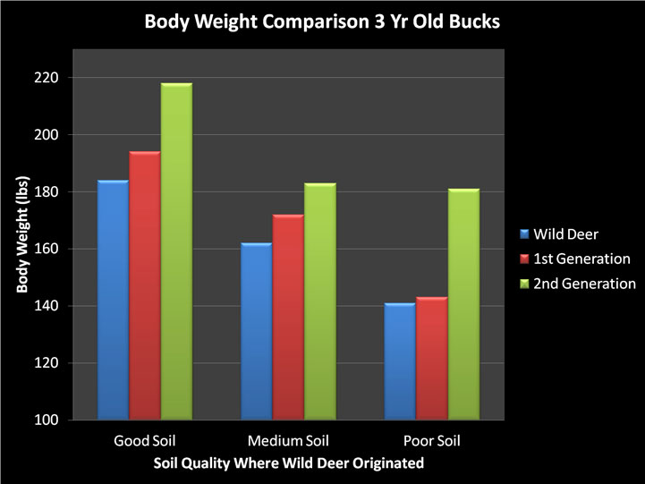 deer body weight comparison graph
