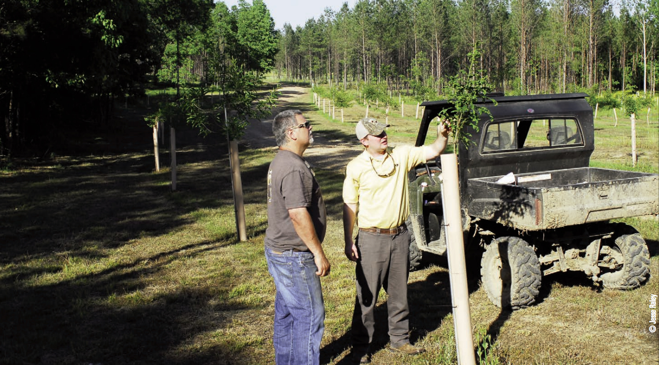 Gamekeepers Planting Trees as a Visual Barrier