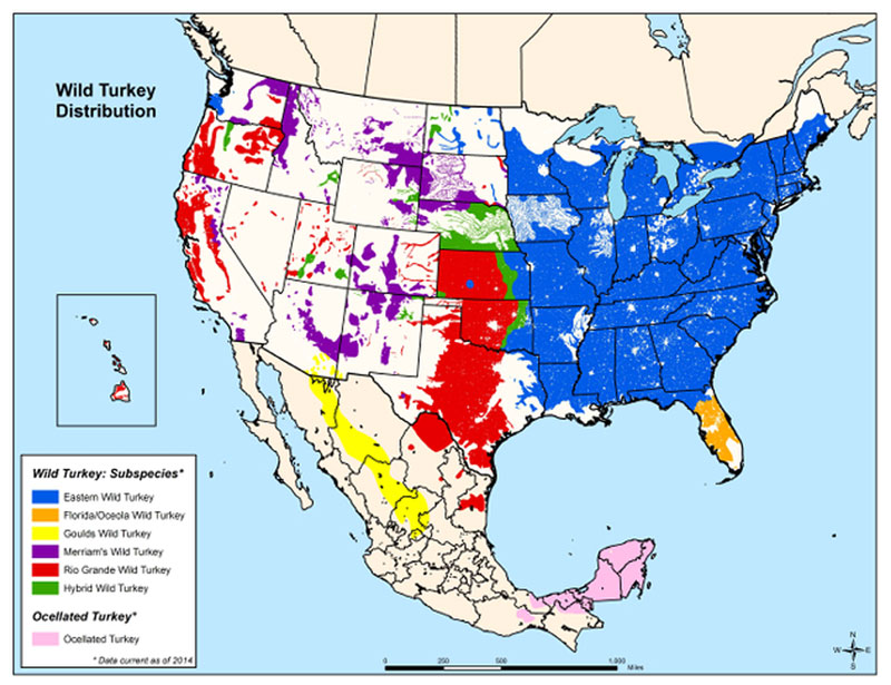 wild turkey species map