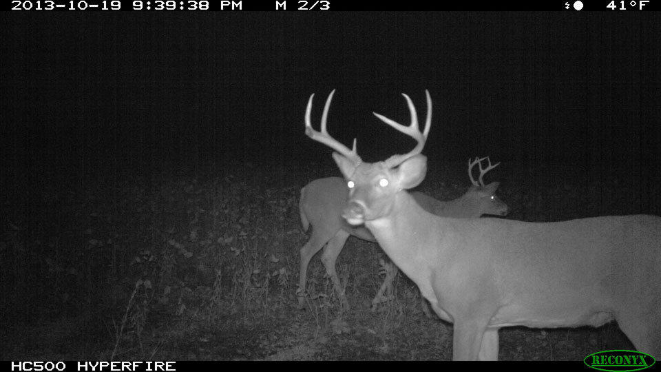 Virgel Shook KY buck