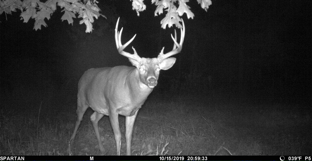 big buck on camera
