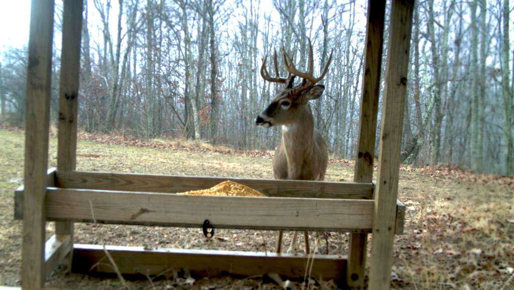 pro protein gauge and with stand deer fill feeder heavy products for