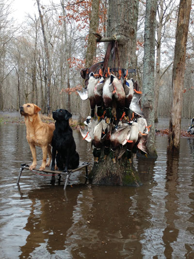 duck hunting dogs