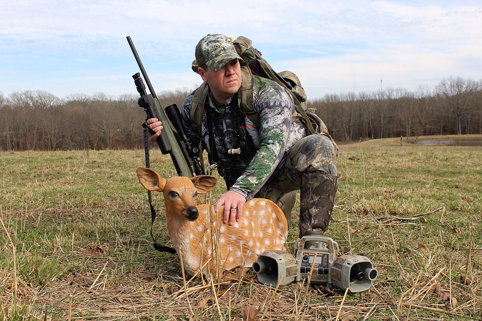 hunting coyote with fawn decoy