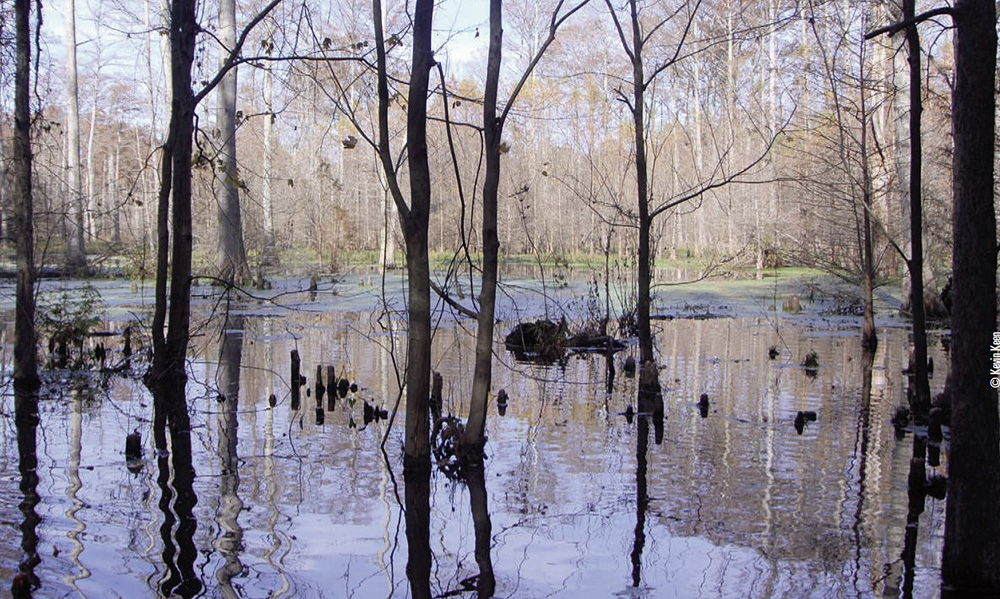 flooded hardwoods