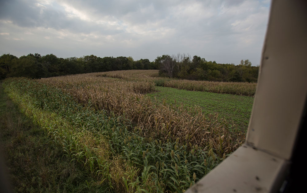 food plot overview