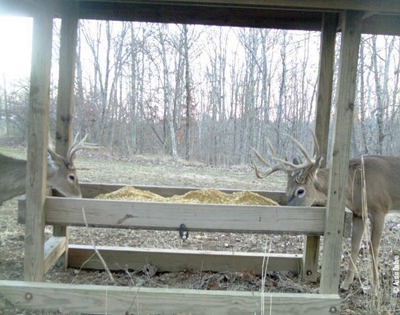 free choice deer feeder