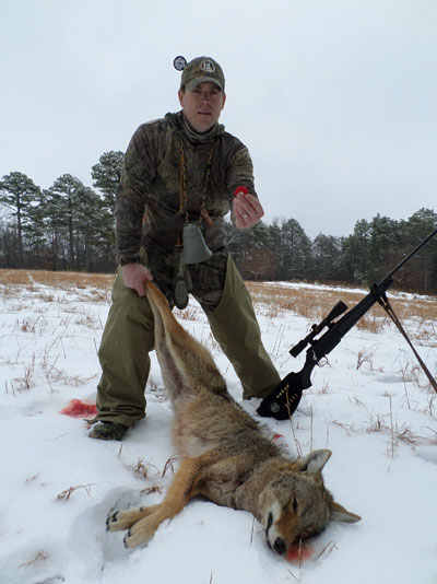 heath wood with coyote harvest