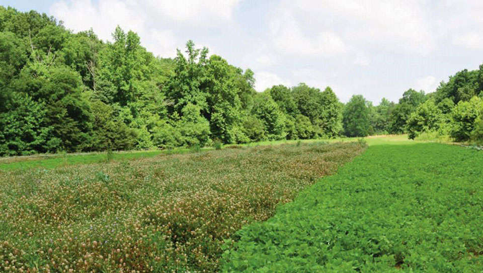 protected food plot