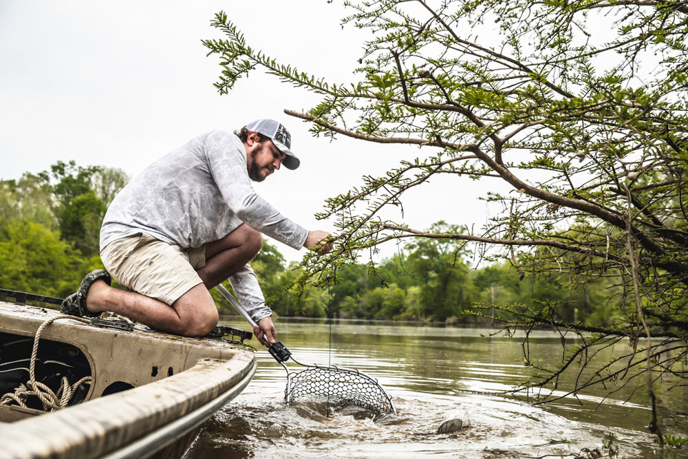 netting catfish on limb line