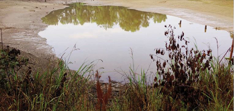 ELIMINATING WILD FISH FROM NEW OR RENOVATED PONDS