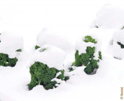 snow covered vegetation