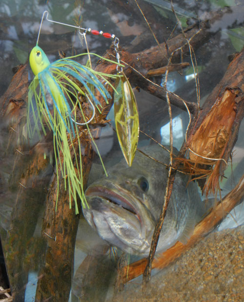 spinner bait bass
