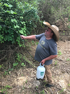 spraying kudzu
