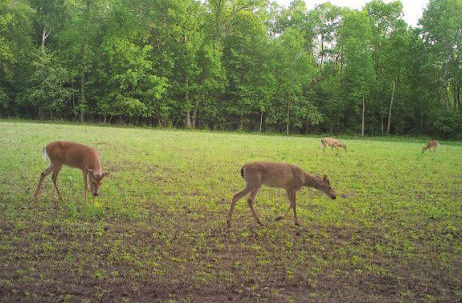 time lapse game camera photo