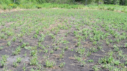 unprotected food plot