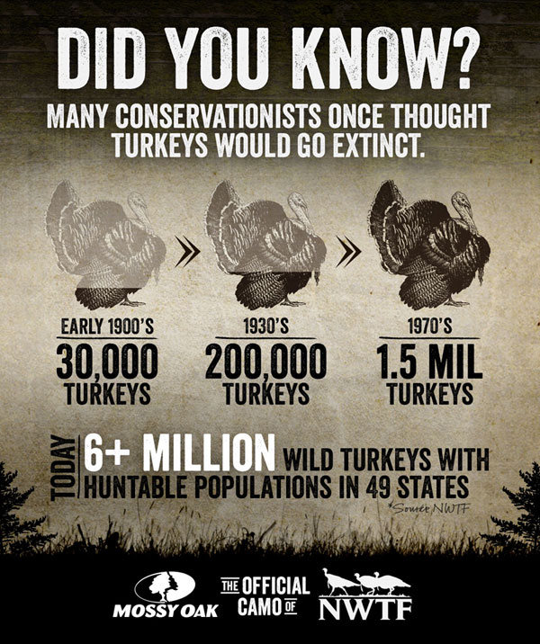 Wild turkey success infographic